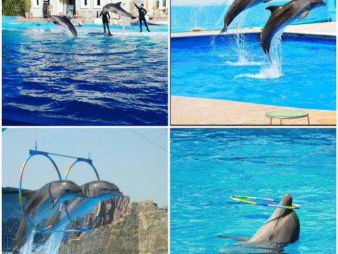 Посетить Дельфинарий в Шарм-эль-Шейхе